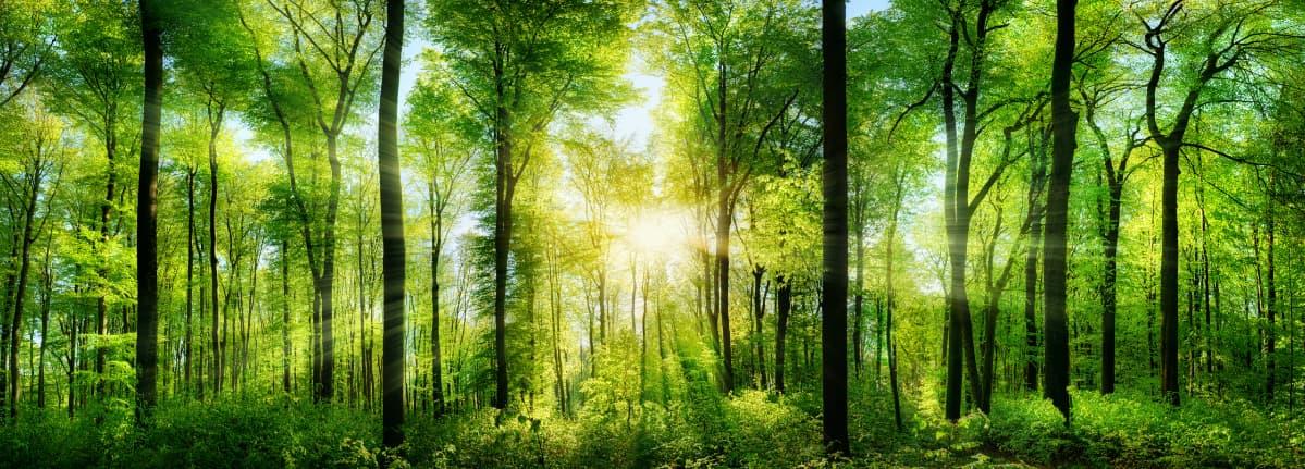 FFC 天然の森林のイメージ